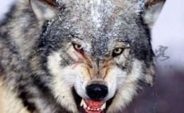 四两拨千斤之营销策划(二)资源破局与狼性执行